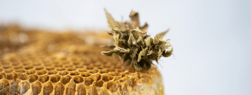 What are CBD Honey Sticks 2